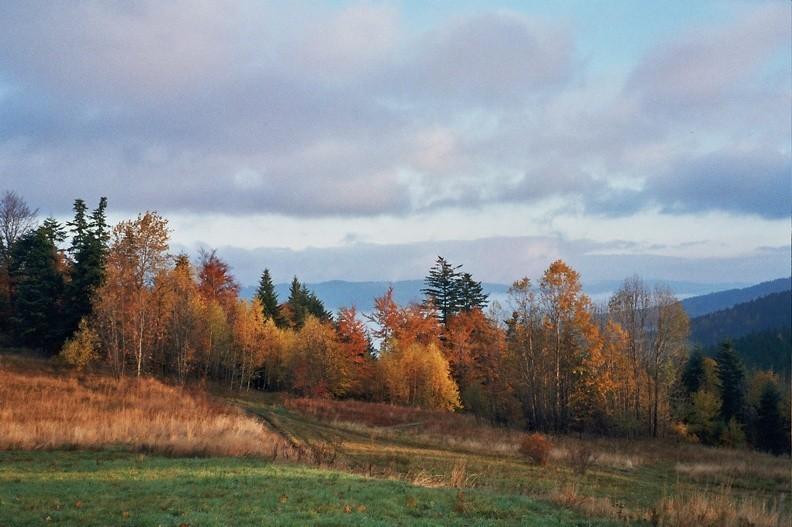 01-0411  15 -- Widok z okolic Chatki na Lasku w kierunku północnym. W oddali grzbiet Beskidu Małego