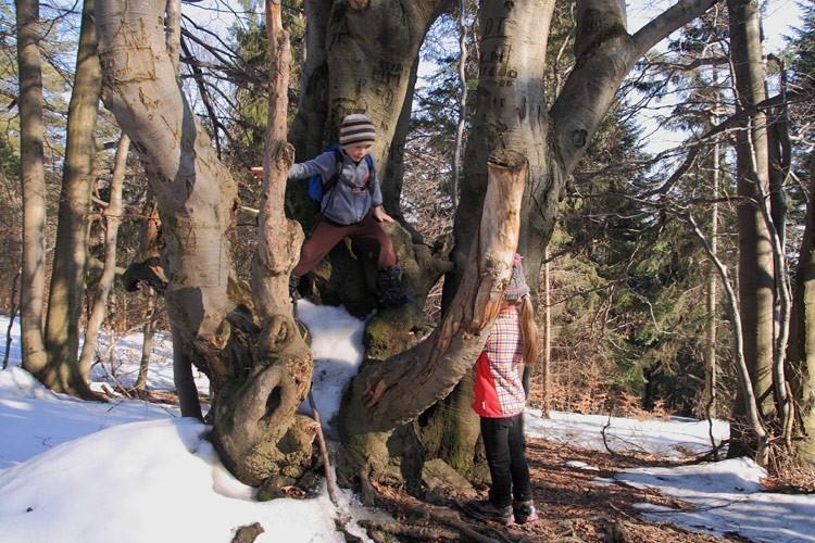 11-IMG 8368 -- Wspin drzewny